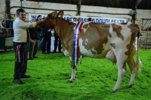 Louise 260 - champion